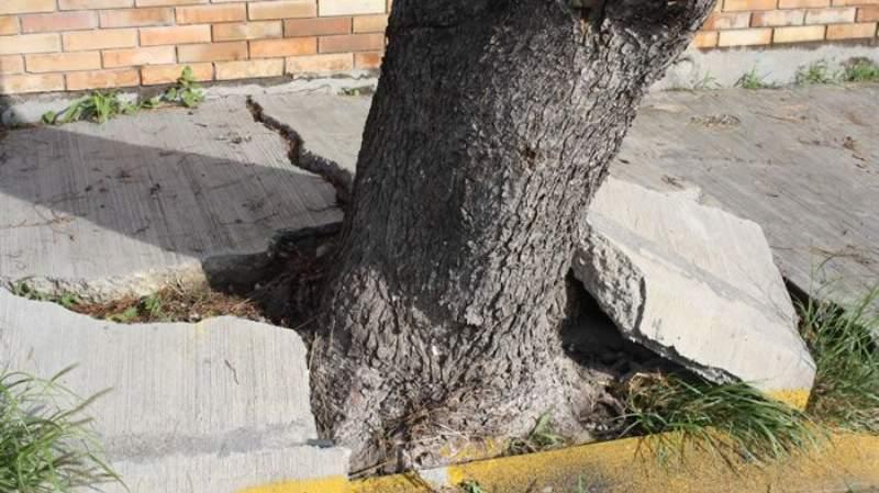 Árbol en espacio inapropiado