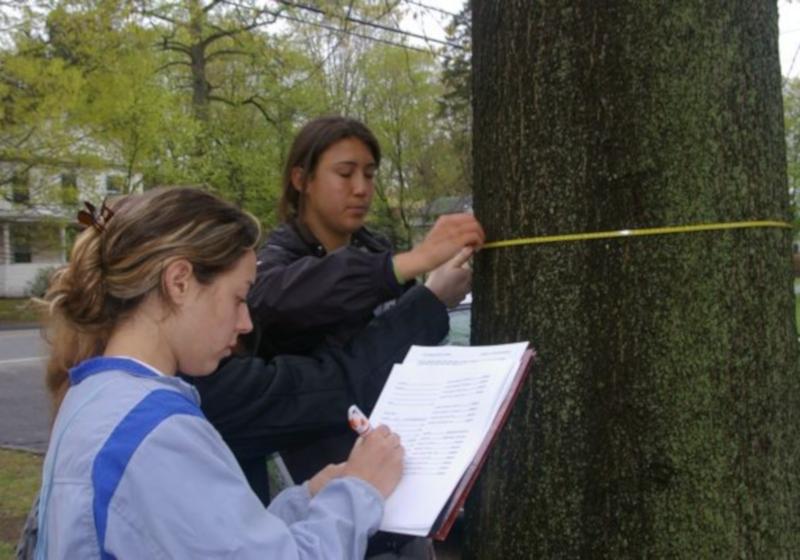 Monitoreo de árboles