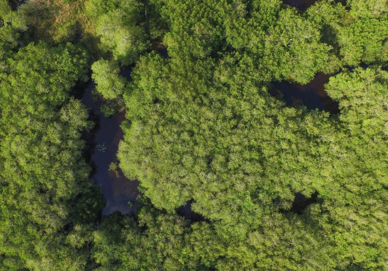 Vista aérea del manglar